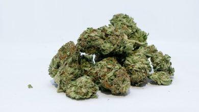 Marihuana, ilustracija, foto: John Miller, pixabay