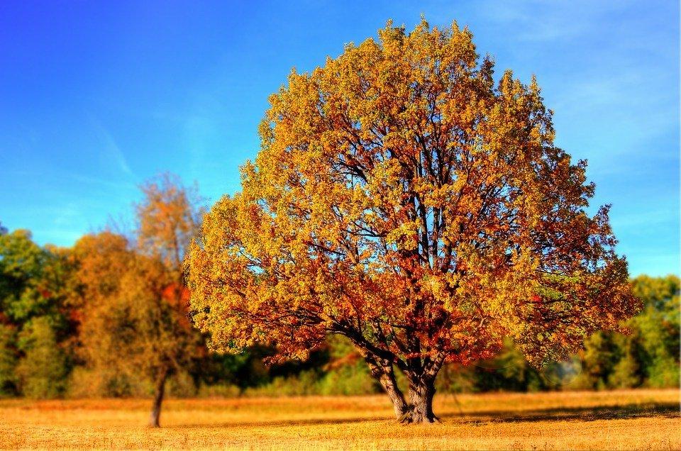 Ilustracija, drvo, foto: Giani Pralea, preuzeto sa: Pixabay