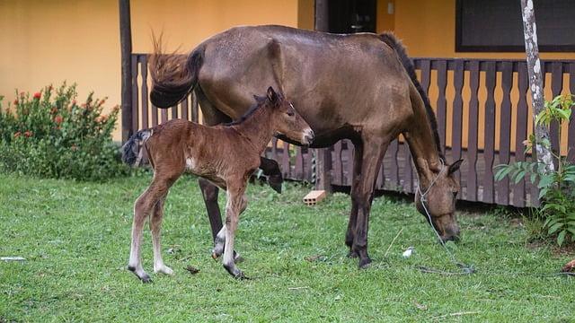 Ilustracija, konj, foto: pixabay